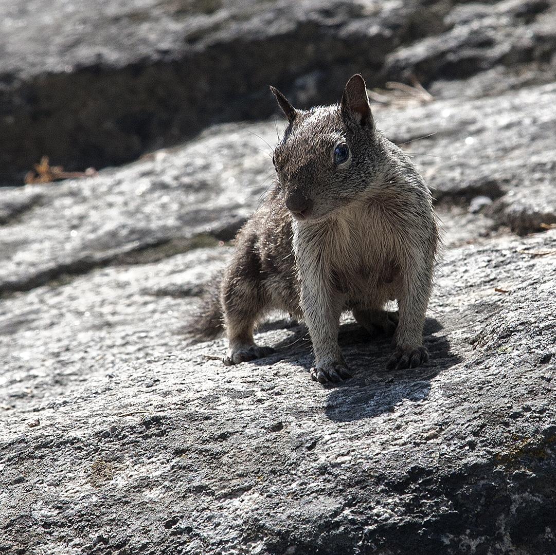 Eekhoorn.jpg