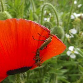 insecten in love