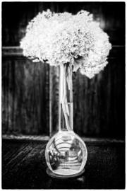Vaas met Hortensia
