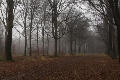 Ruurlose bos