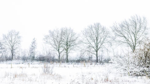 Wondermooie witte wereld